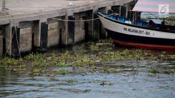 Sebuah kapal berlabuh dekat pinggir pantai Kelurahan Pohe yang dipenuhi eceng gondok, Gorontalo, Jumat (22/2). Tanaman ini berasal dari Danau Limboto yang terbawa arus hingga ke Teluk Gorontalo dan memenuhi pinggiran pantai. (Liputan6.com/Arfandi Ibrahim)