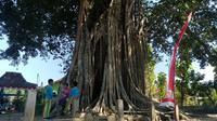 Anak-anak bermain di sekitar pohon bulu di Karangtengah, Jaten, Selogiri, Wonogiri, Jumat (30/8/2019). (Solopos/ Rudi Hartono)