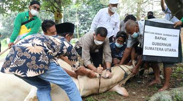 Sapi Jokowi