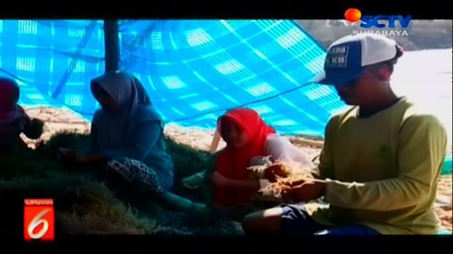 Dampak cuaca buruk yang mengakibatkan gelombang laut meninggi, meresahkan para petani rumput laut di Madura, Jawa Timur.