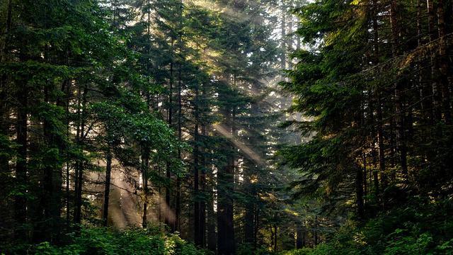 Hutan Lindung di Indonesia