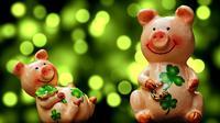 Bagaimana kepribadian orang yang lahir di tahun babi? (dok. Pixabay.com/Esther Novita Inochi)
