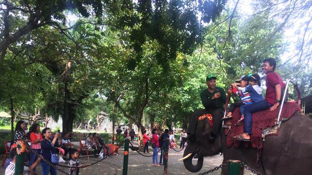 Gajah Dan Unta Jadi Favorit Pengunjung Kebun Binatang Surabaya