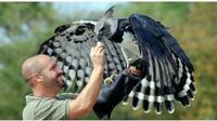 Elang Harpy (Sumber: indiatoday)