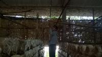 Mahasiswa UNY menciptakan alat untuk mempermudah budidaya jamur tiram (Liputan6.com/ Switzy Sabandar)