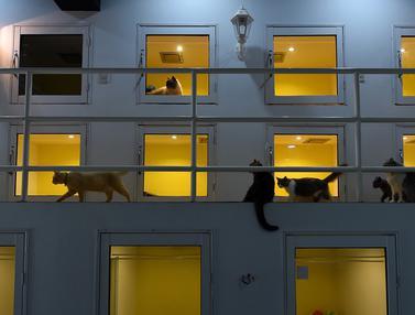 Hotel Bintang Lima untuk Kucing