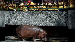 Pengunjung melihat kuda nil betina bernama Mali yang merayakan ulang tahun ke-50 di Kebun Binatang Dusit, Bangkok, Thailand, Jumat (23/9). (REUTERS / Chaiwat Subprasom)