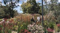 Bunga Liar di Kings Park, Australia Barat (Liputan6.com/Shinta NM Sinaga)