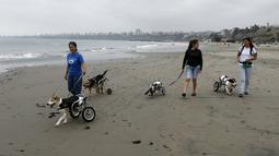 Sara Moran berjalan bersama sejumlah anjing yang lumpuh di kursi roda di Pescadores pantai  Chorrillos, Lima, (7/9/2015). Sara Moran memiliki tempat penampungan untuk anjing liar dan terluka akibat kecelakaan di Milagros Perrunos. ( REUTERS/Mariana Bazo)