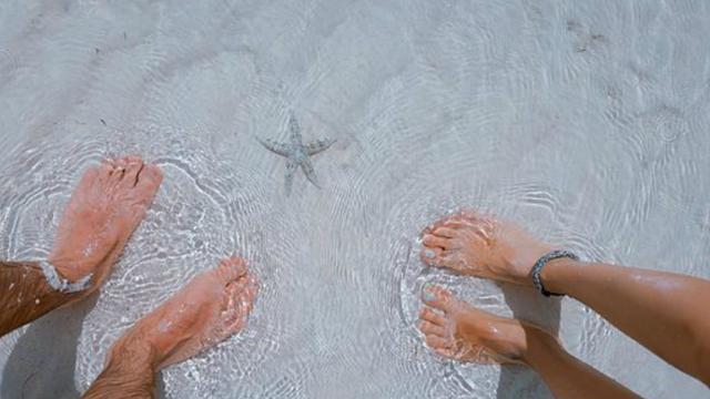 Ilustrasi bintang laut