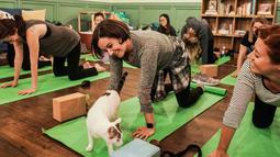 Rae Paoletta melakukan meditasi dalam kelas yoga bersama kucing  di kafe kucing Brooklyn, New York, Rabu (13/3). Kafe ini menawarkan tempat latihan yoga dengan ditemani kucing-kucing menggemaskan. (REUTERS/Jeenah Moon)