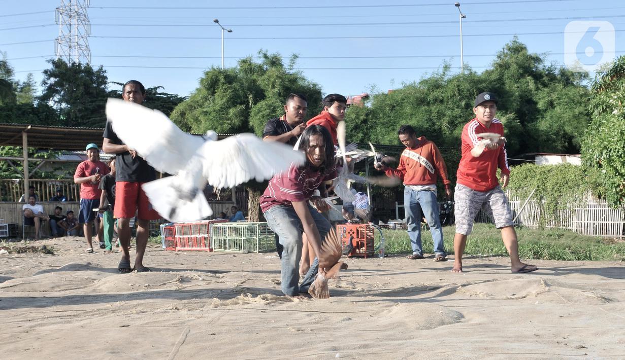 Warga melatih burung dara atau merpati kolongan di kawasan Papanggo, Jakarta, Rabu (29/1/2020). Burung merpati kolongan merupakan salah satu hobi warga Ibu Kota yang dapat menghasilkan uang hingga ratusan juta rupiah. (merdeka.com/Iqbal S. Nugroho)