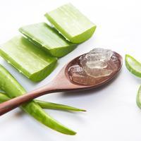 6 Manfaat Lidah Buaya untuk Rambut si Kecil (Thanatip S/Shutterstock)
