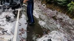 Perwira polisi berada di lokasi kecelakaan sebuah truk pengangkut belut berlendir di jalan raya Highway 101, Oregon, Kamis (13/7). Truk yang membawa 3.402 kg belut lendir itu tak bisa menghentikan laju dan malah terguling. (Oregon State Police via AP)