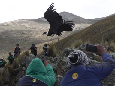 Jurnalis dan ilmuwan mengambil gambar saat burung kondor Andes dilepaskan ke alam liar oleh dokter hewan Bolivia, di pinggiran Choquekhota, Bolivia, Selasa (23/2/2021). Dua burung kondor Bolivia yang terancam punah dilepaskan setelah pulih akibat terjatuh pada Februari. (AP Photo/Juan Karita)