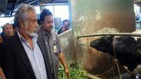 PM Timor Leste, Xanana Gusmao didampingi Wagub Jatim, Syaifullah Yusuf melihat sapi perah di peternakan Sekarsari, Pasuruan, Jatim, Jumat (10/9).(Antara)