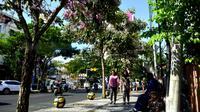 Pohon Tabebuya di Surabaya, Jawa Timur (Foto: Liputan6.com/Dian Kurniawan)
