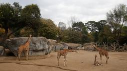 Jerapah berusia dua bulan duduk di kandangnya di Kebun Binatang Chapultepec, Mexico City, 29 Desember 2019. Kebun binatang membuka kesempatan untuk memberikan nama bayi jerapah itu melalui melalui pemungutan suara publik. (AP Photo/Ginnette Riquelme)