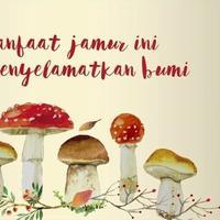 5 Manfaat Jamur yang Bisa Menyelamatkan Bumi