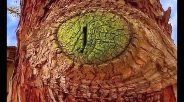 Kumpulan gambar pohon berbentuk aneh, unik, dan lucu. Betul-betul suatu kekuatan imajinasi manusia.