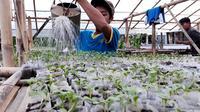 Santri Ponpes Rubat Mbalong Ell Firdaus tengah menyiram bibit tanaman dengan air yang sudah dicampur dengan sedikit pupuk air liur. (Foto: Liputan6.com/Muhamad Ridlo)