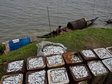 Nelayan  menunggu di kapal mereka untuk menjual hasil tangkapan mereka di tepi sungai Brahmaputra di Jorhat, Assam, India, (3/4). Brahmaputra adalah salah satu sungai terbesar di Asia, yang melewati wilayah China Tibet, India dan Bangladesh sebelum konvergen ke Teluk Benggala. (AP Photo/Anupam Nath)