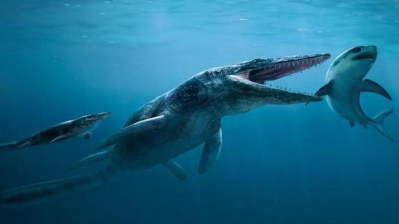 Jauh Lebih Ganas dari Hiu Putih, 7 Monster Laut Prasejarah Mengerikan