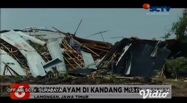 Sedikitnya 7 bangunan di 2 desa di Kecamatan Modo Kabupaten Lamongan Jawa Timur, ambruk akibat hujan disertai angin kencang. Banyak ayam yang berada di kandang mati, sementara sisanya masih bisa diselamatkan dan dipindah ke kandang lain.
