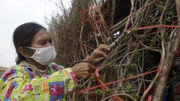 Seorang pedagang menyiapkan bundel pohon bunga kuning untuk dijual di toko pinggir jalan di Phnom Penh, Kamboja (8/2/2021).  Imlek pada tahun ini jatuh pada tanggal 12 Februar 2021. (AP Photo/Heng Sinith)