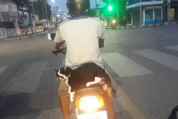 copyright by bangkok.coconuts.co
