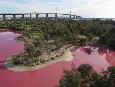 Ada Danau Pink di Australia
