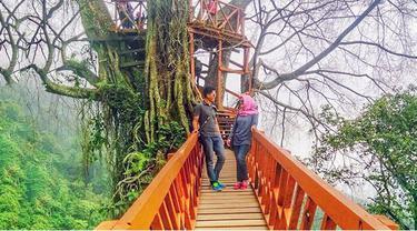 Rumah Pohon Curug Ciherang Dibanjiri Pemburu Selfie