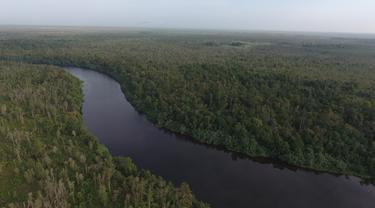 Hutan Kendawangan habitat orangutan (Foto: Ryan Avriandy)