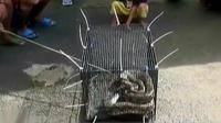 Seekor ular sanca sepanjang 4 meter yang bersarang di atap rumah. (Liputan 6 SCTV)