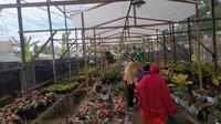 Usaha tanaman hias di Gorontalo yang melejit meski dalam terpaan pandemi Covid-19. (Foto:Liputan6.com/Arfandi Ibrahim)