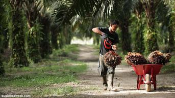 Peremajaan Sawit Rakyat di Kalimantan Selatan Serap 5.274 Tenaga Kerja