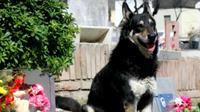 Seekor anjing dengan setia menunggui makam tuannya selama 11 tahun sampai akhirnya mengembuskan napas terakhirnya. (Doc: https://www.youtube.com/watch?time_continue=41&v=TUIqu0c0EtI)