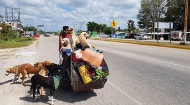 Bermodalkan Sepeda Roda Tiga, Pria Ini Dedikasikan Hidupnya Bagi Anjing Liar