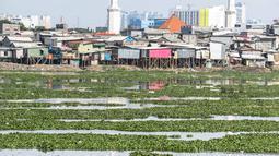 Suasana Waduk Pluit yang dipenuhi eceng gondok, Jakarta, Jumat (22/2). Pendangkalan waduk menyebabkan tanaman eceng gondok tumbuh liar di waduk pluit. (Liputan6.com/Faizal Fanani)