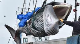 Paus Minke di angkut sebuah kapal di pelabuhan Kushiro, Prefektur Hokkaido, Jepang (1/7/2019). Perburuan paus yang dilakukan Jepang tetap ada batasnya. Yakni total 227 paus sepanjang musim hingga akhir Desember, di antaranya 52 paus Minke, 150 paus Bryde dan 25 paus Sei. (AFP Photo/Kazuhiro Nogi)