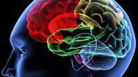 Kehilangan kemampuan berbahasa setelah koma disebabkan karena rusaknya salah satu bagian otak (Foto: foxnews.com)