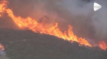 Kebakaran hutan terjadi di Newbury Park, California. Api dengan cepat menghanguskan 40 hektar area hutan.