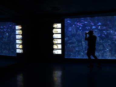 Pengunjung melihat satwa air yang ditampilkan di Jakarta Aquarium dan Safari, Jakarta, Rabu (27/1/2021). Jakarta Aquarium dan Safari (JAQS) memiliki satwa baru yang unik yaitu Naga Laut (Sea Dragons) dan Gurita Raksasa Giant Pacific Octopus (Enteroctopus Dofleini). (merdeka.com/Imam Buhori)
