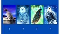 Pilih Salah Satu Gambar Burung Ini Dapat Ungkap Kelebihan dan Kekuranganmu (Sumber: Namatest)