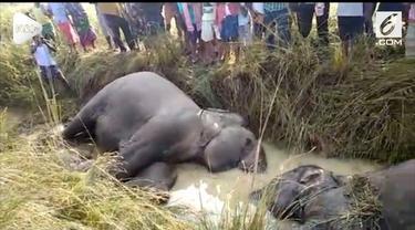 Sebanyak tujuh ekor gajah tewas setelah tersengat listrik saat sedang melintas di Odisha, India.