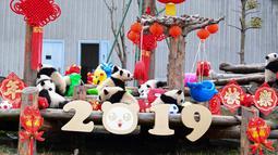 Anak-anak panda bermain di kandangnya dengan dekorasi Tahun Baru Imlek yang dikenal sebagai Tahun Babi, di provinsi Sichuan, China, 31 Januari 2019. Sebelas anak panda yang lahir pada tahun 2018 diperlihatkan kepada publik untuk menyambut Imlek. (STR/AFP)