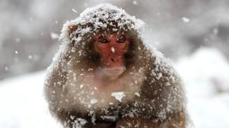 Seekor kera duduk diatas kayu kedinginan saat salju turun di Wulongkou Nature Reserve, Tiongkok (6/1). (AFP Photo/China Out)