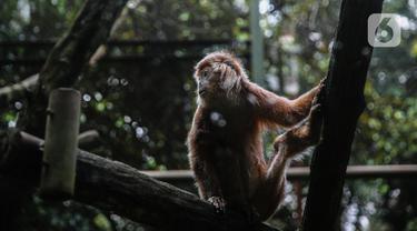 FOTO: Melihat Kondisi Hewan di Ragunan Pasca Penerapan WFH dan PSBB