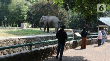 Wisatawan melihat gajah saat berkunjung ke Taman Margasatwa Ragunan, Jakarta, Sabtu (1/8/2020). Di masa pandemi corona ini, Ragunan sepi pengunjung di libur panjang Idul Adha 1441 H dibandingkan tahun lalu. (Liputan6.com/Herman Zakharia)