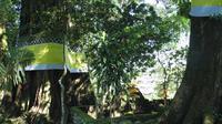 Pohon raksasa berusia ratusan tahun ini menaungi para leluhur desa Nglurah, Tawangmangu, Karanganyar yaitu Narotama dan Nyai Rasa Putih. (foto: Liputan6.com / Pemkab Karanganyar / edhie prayitno ige)